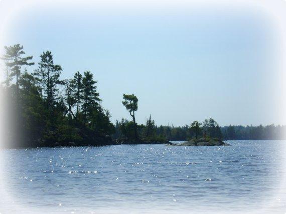 Island Trees IP